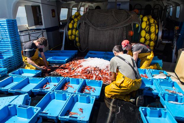 pescaturismo gamba palamos